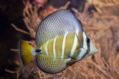 Tangs Fish Care Guide