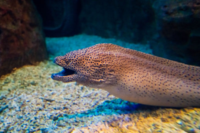 Moray Eel Care Guide